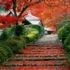 munibunny: (kyoto garden staircase)
