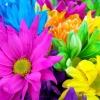 munibunny: (pretty flowers)
