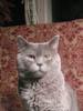 a_i_s_l_i_n_g: (kitty)