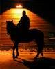 a_i_s_l_i_n_g: (winter horse)