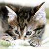 d_a_n_n_y: (cat)