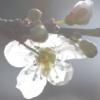 terracotta: (spring)