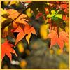 terracotta: (fall)