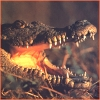 coffeetime: (crocodile)