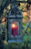 littlegardenfairy: (Lantern)