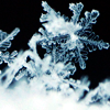 raptor: (Snowflake)