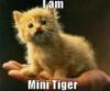 tigerweave: (memry)