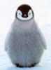 royal_penguin: (penguin)