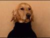 royal_penguin: (dog)