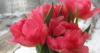 naffanja: (flower)