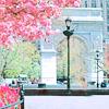 sarken: washington square arch in spring ([nyc] washington square)