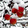 annyuta: (wintertime)