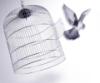 fr333bird: (birdcage)