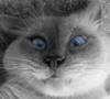 alter_idem: (cat)