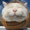 alter_idem: (weird cat)