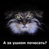 volch_olga: (киска)
