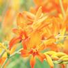 ypsilon42: (flower)