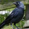 borrowedfeathers: (The bird in borrowed feathers)