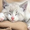 onoona: (Kitten)