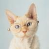 adjectivegail: (geeky kitten)