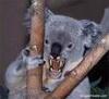 koalena: (killer_koala)