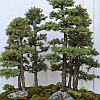tezukamarilyn: (bonsai forest)