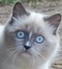 wojzeh: (cat)