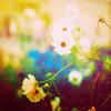 sapphireblack: (sunny flowers)