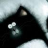 tiffanydrop: (black cat)
