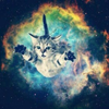 remixtoakitten: (space kitten) (Default)