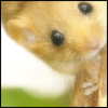 mitchy: (Dormouse)
