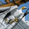 kryakwa: (HMS_Gannet)
