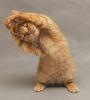 graf_mur: (Спортивный кот)
