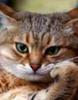graf_mur: (Сурьёзный кот)
