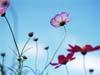 ksyu: (цветок)
