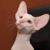 sheva_vet: (cat)