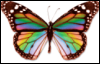 delusive_oneira: (butterfly)