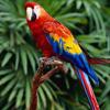 notseenorheard: (Parrot)