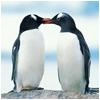 lugovaya: (Пингвины)