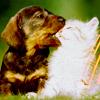 lugovaya: (Собака и кот)