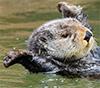 sunnymodffa: (Joyful Otter)