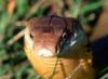 cobra_queens: (Cobra_queens)