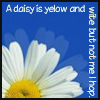 "thefourthvine: Picture of a daisy, with deliberately misspelled text: ""A daisy is yelow and wite but not me I hop."" (Daisy)"