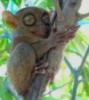 e_koala: (долгопят)