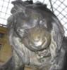 e_koala: (злюсь, лев)