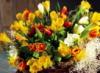 origona: (цветы)