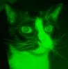 "tomtac: (arresting ""Little Green Man"" feline)"