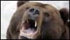 anglomedved: (angrybear)