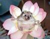 anatta: (ejik in lotus)