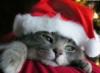 kotenka_m: (рождественский)